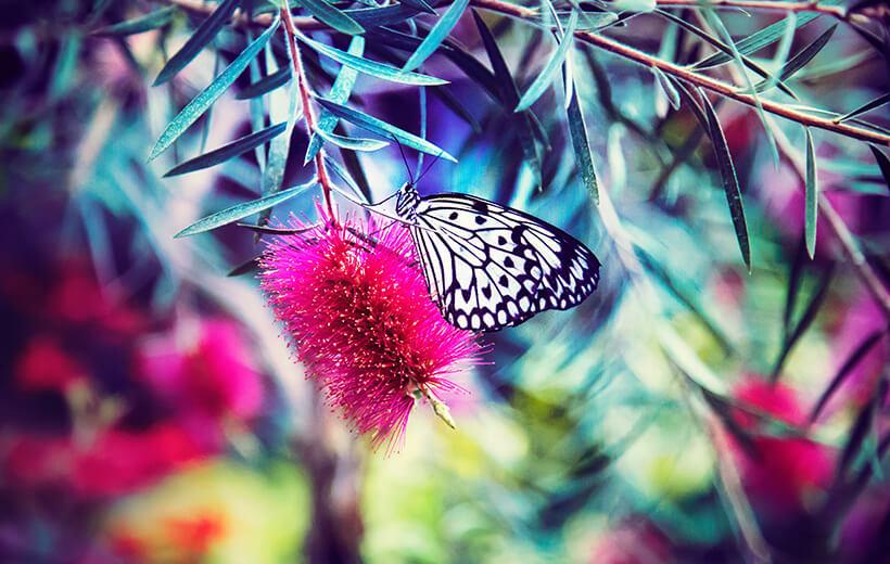 Das Bild zeigt einen Schmetterling auf einer Blüte