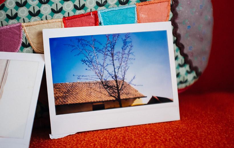 Der vertrocknete Baum