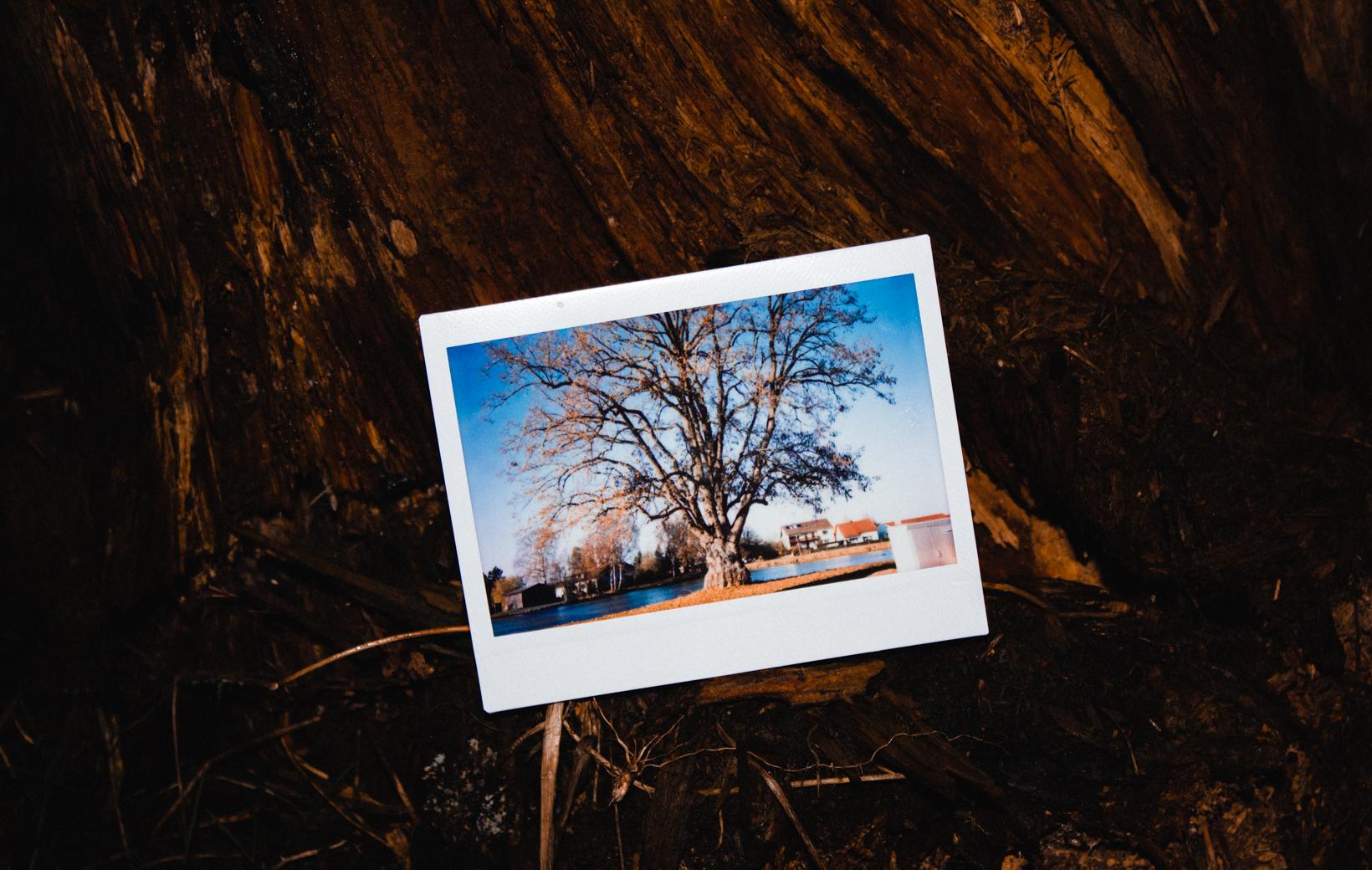 Bild zeigt ein Polaroid von einem Baum