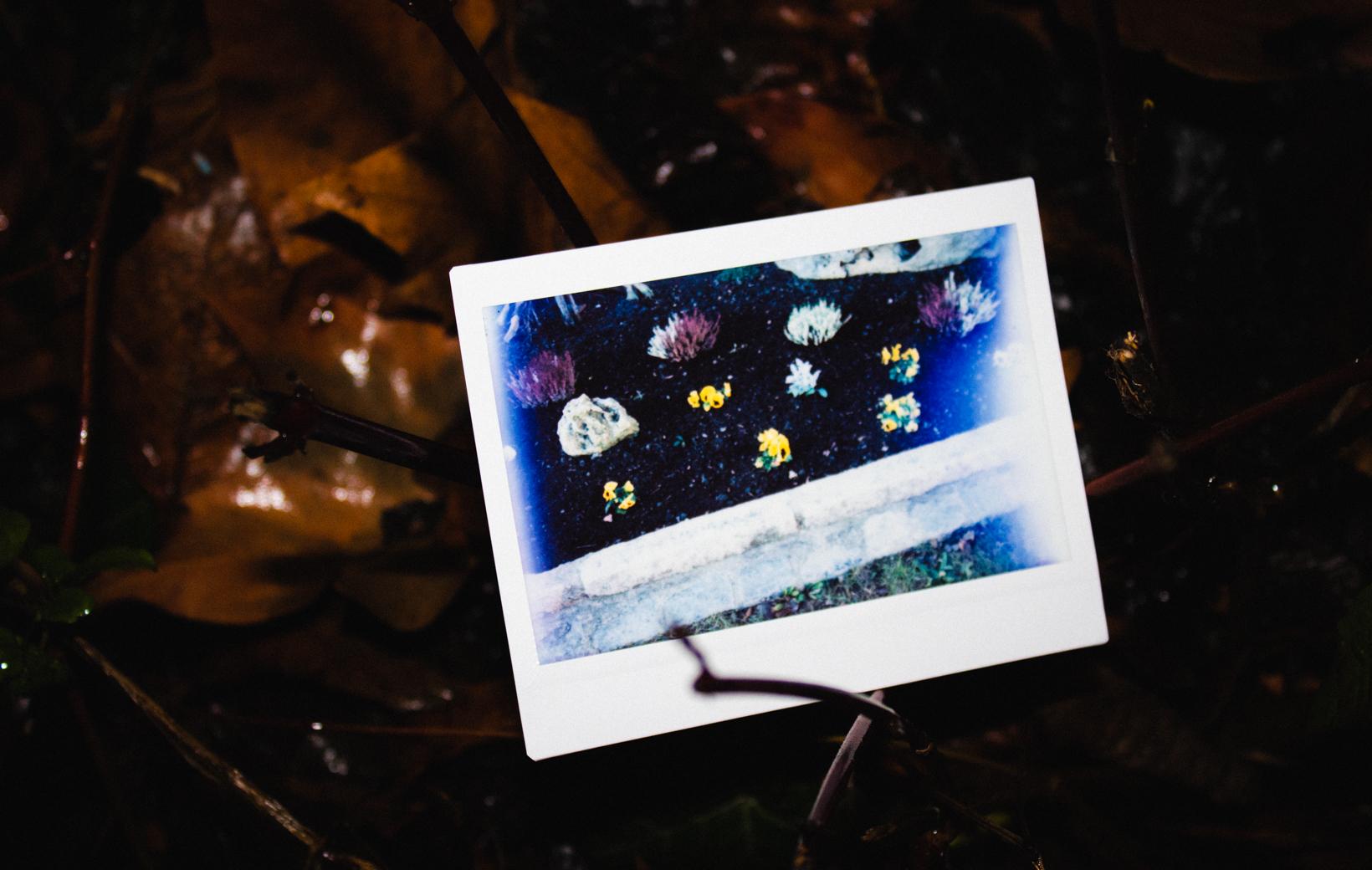Das Bild zeigt ein Polaroid mit einem Blumenbeet
