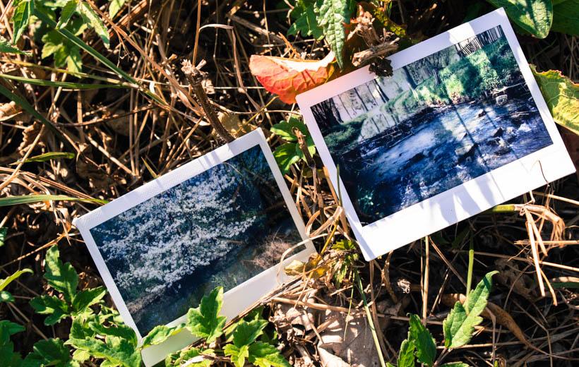 Bild zeigt zwei Polaroids mit Frühlingsbildern