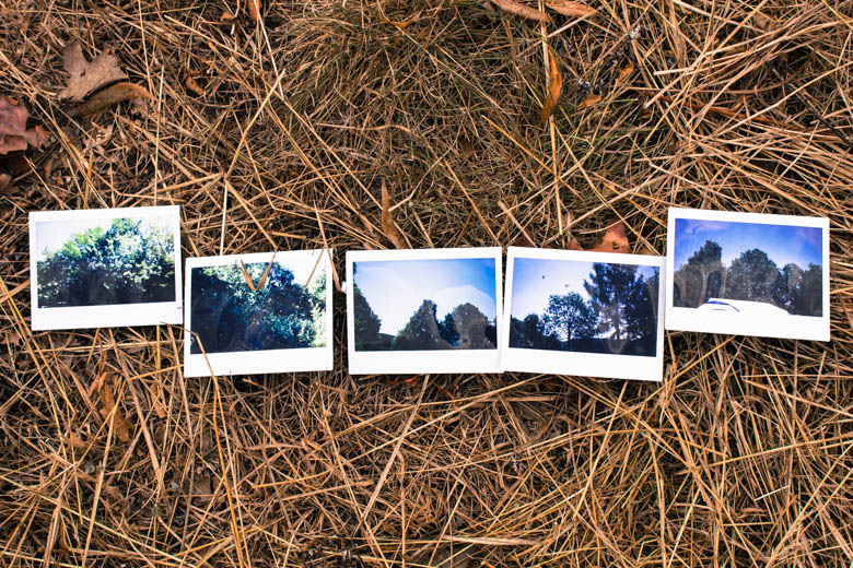 Polaroids mit Bäumen
