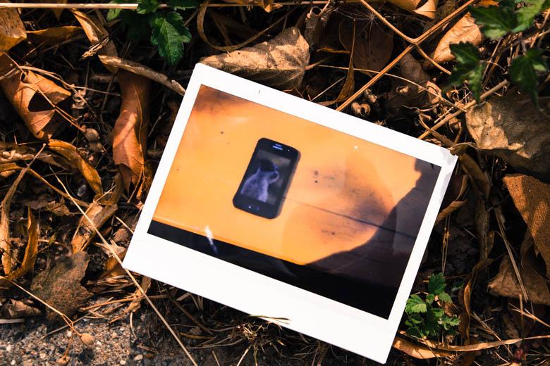 Polaroid mit Bild von einem Hund